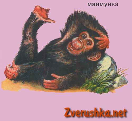 Развиващи картинки. Маймунка