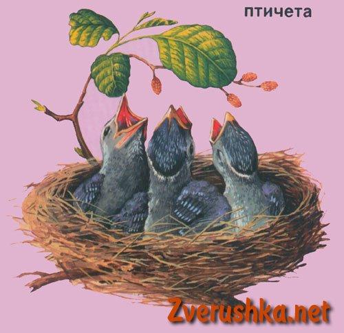 Развиващи картинки. Птичета
