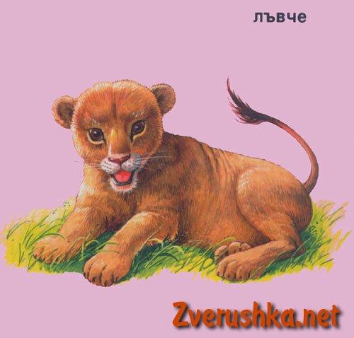 Развиващи картинки. Лъвче