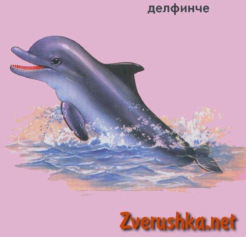 Развиващи картинки. Делфинче