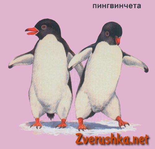 Развиващи картинки. Пингвинчета