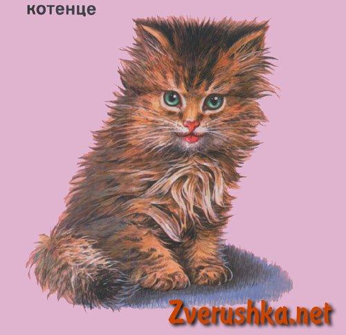 Развиващи картинки. Котенце